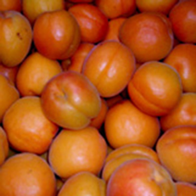 Early Ril Apricots