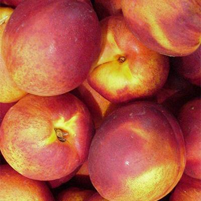 Redgold Nectarine Trees